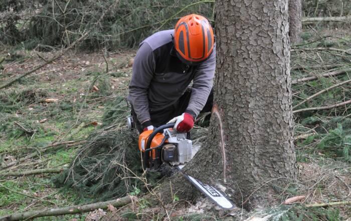 Fälla träd