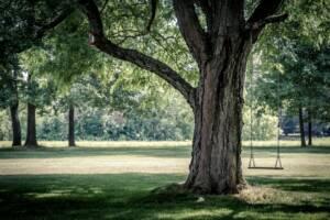 Trädfällning - Särskilt skyddsvärda träd