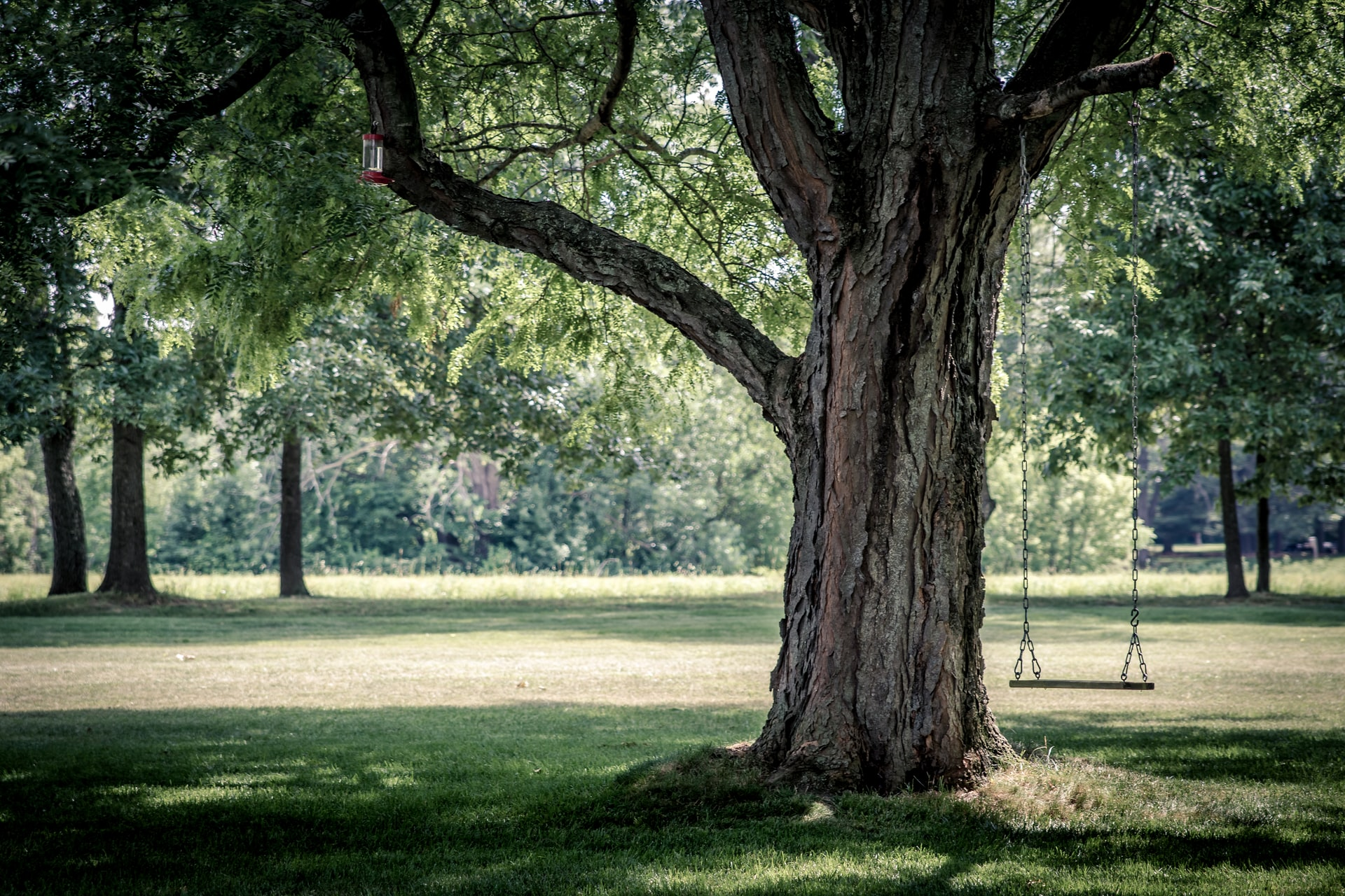 Särskilt skyddsvärda träd