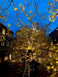 Träd i belysning