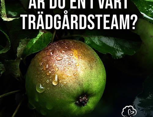 Trädakuten söker Trädgårdsmästare/Trädbeskärare till Göteborg