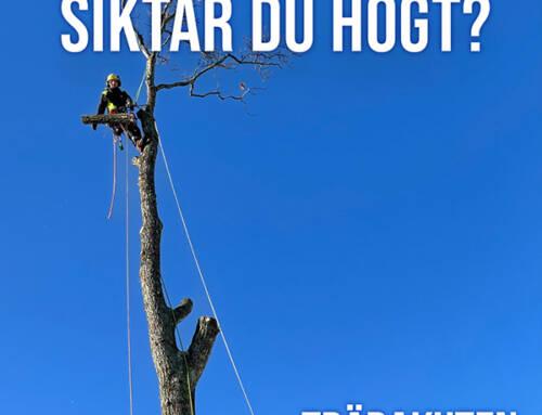 Trädakuten söker arborister till Dalarna, Göteborg och Skaraborg